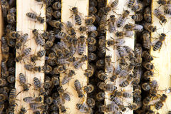 Bees Stock Images