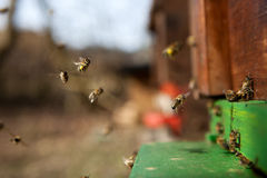 Bees Stock Photos