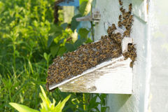 Bees near a beehive Royalty Free Stock Photography