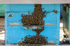 Bees near a beehive taphole. Photographed in Russia, in the Orenburg region, in the countryside royalty free stock image