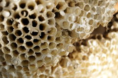 The bees nest Stock Photos