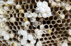 bees nest Royalty Free Stock Photos