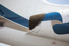 Bees on a Plane Royalty Free Stock Photography