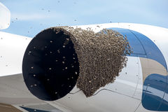 Bees on a Plane Stock Photography