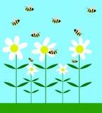 Bees Pollinating Chamomile Flowers Flat Design. Bees and white chamomile flowers flat vector art stock illustration
