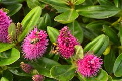 Bees Pollinating Flowers. Animals, Crafts, Portrait stock photography