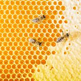 Bees prepare honey. Bee on honeycomb. Top view Royalty Free Stock Photo