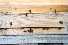 Bees rest on the bee boxes Stock Image