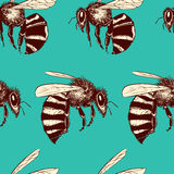 Bees seamless pattern. Vector seamless pattern with hand drawn honey bees made in retro style. Beautiful ink drawing vector illustration
