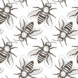 Bees seamless vector pattern. Stock Image