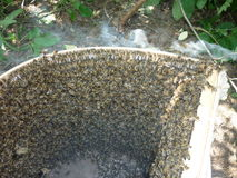 Bees. Swarm beekeeper caught in roevnyu. waiting for transplant into another hive Stock Images