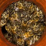 Bees Stock Photos
