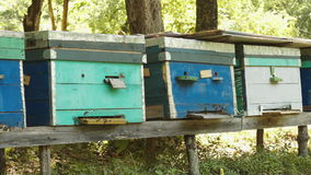 Bees swarming from the beehive stock video footage