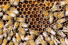 Bees Swarming On Honeycomb Royalty Free Stock Photography