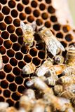 Bees Swarming On Honeycomb Royalty Free Stock Images