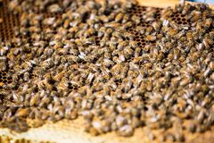 Bees Swarming On Honeycomb Stock Images