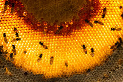 Bees swarming on a honeycomb stilllife Royalty Free Stock Image