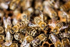 Bees Swarming Stock Photos