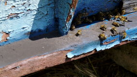 Bees in to beehive summer time stock footage
