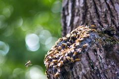 Bees in a tree and in air royalty free stock photo