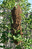 Bees on tree Stock Photo