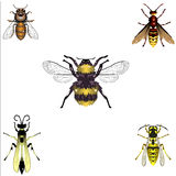 Bees and Wasps. Five insects from the bee / wasp family