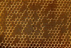 Bees, which come from the harsh winter. Bees Stock Images