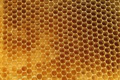 Bees, which come from the harsh winter. Bees Royalty Free Stock Photo