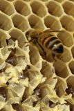 Bees, which come from the harsh winter. Bees, ncoming out of the harsh winter in their hives. nCelebration to build the cells for their honey, so perfectly Stock Photo