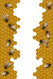 Bees working frame Royalty Free Stock Photo