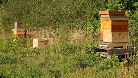 Beeshives em um pomar Fotos de Stock Royalty Free