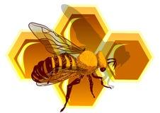 Beeswax и пчела иллюстрация штока