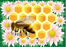 Beeswax with bee Royalty Free Stock Images