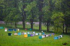 beeswax Beekeepers работая в пасеке Стоковое Фото