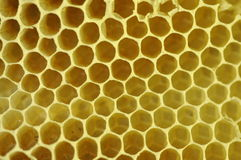 Beeswax honeycomb. Closeup of empty beeswax honeycomb cells royalty free stock photo
