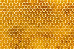 Beeswax honeycomb foundation close up Royalty Free Stock Images