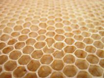 Beeswax Texture Without Honey Royalty Free Stock Photo