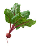 Beet isolated Royalty Free Stock Photography