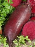 Beet. Large oblong beet, its cut and parsley Royalty Free Stock Photo