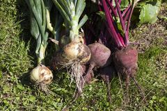 Free Beet And Onions Royalty Free Stock Photos - 121689028