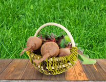 Beet in a basket on a green background Stock Photography