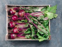 Beet, beetroot bunch on dark background, copy space. Beet, beetroot bunch in wooden box on dark stone or concrete background. Fresh ripe beetroot with leaf on Royalty Free Stock Photos