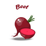 Beet or beetroot. Vector illustration of beet or beetroot isolated on white background. Summer healthy food design. vegetarian or diet vegetable menu Stock Image