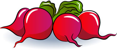 Beet. The beetroots clip art on white background Royalty Free Stock Photography