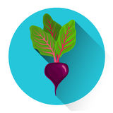 Beet Colorful Vegetable Icon Stock Photo