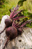 Beet Stock Photography