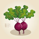 beet fresh vegetable icon Royalty Free Stock Image