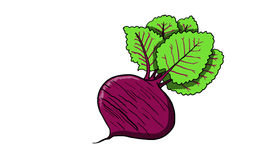 Beet fruit, illustration Stock Photography