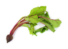 Beet greens with single beet Stock Photo