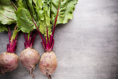 Beet harvest. Royalty Free Stock Images